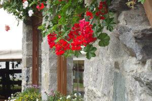 esterno_fiori